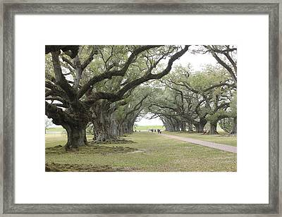 Oak Alley Plantation Entrance Walkway Framed Print by Imagery-at- Work