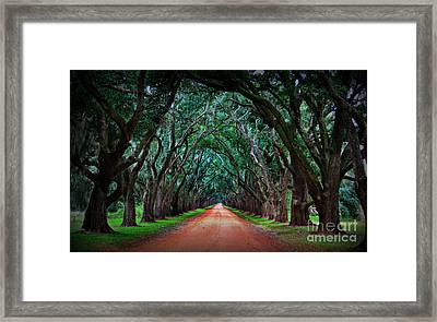 Oak Alley Road Framed Print