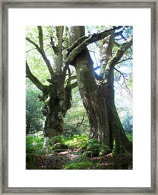 Oak And Beech Embrace Framed Print