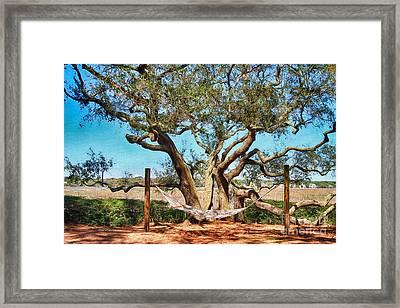 Oak And Hammock Framed Print