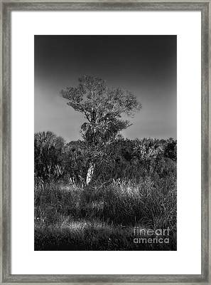 Oak And Palm Framed Print by Marvin Spates