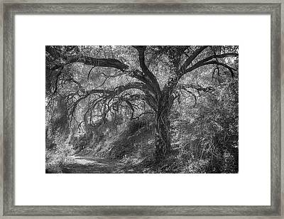 Framed Print featuring the photograph Oak And Trail by Alexander Kunz