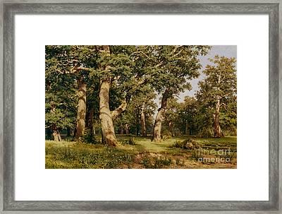 Oak Grove Framed Print by Ivan Ivanovich Shishkin