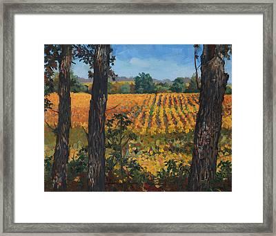 Oak Grove Of Grant Township Framed Print