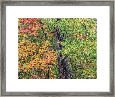 Oak Hickory Woodland Framed Print by Tim Fitzharris
