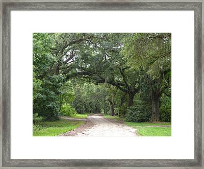 Oak Laden Back Road Framed Print