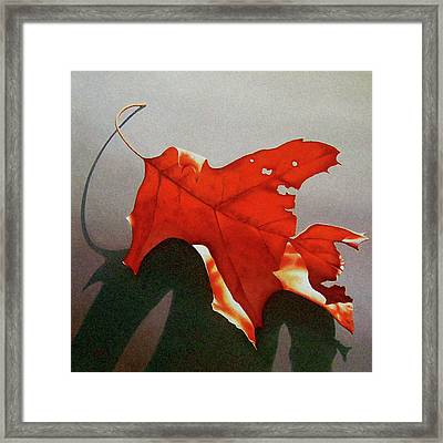 Oak Leaf 1 Framed Print