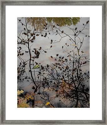 Oak Leaf Reflection At Spirit Springs Framed Print