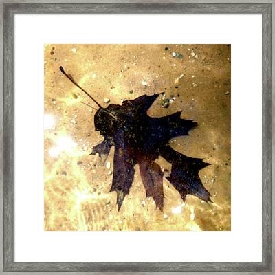 Oak Leaf Underwater Framed Print by Tara Hutton