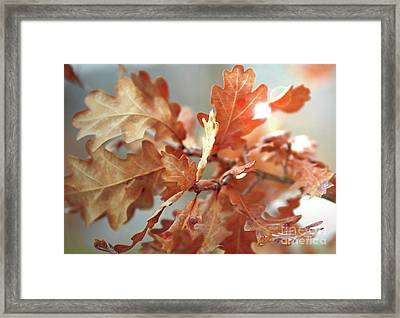 Oak Leaves In Autumn Framed Print