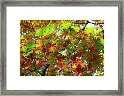 Oak Leaves Framed Print by Karen Adams