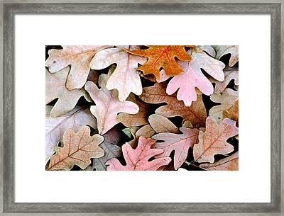 Oak Leaves Photo Framed Print by Peter J Sucy