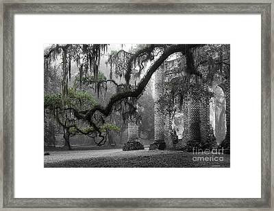 Oak Limb At Old Sheldon Church Framed Print by Scott Hansen