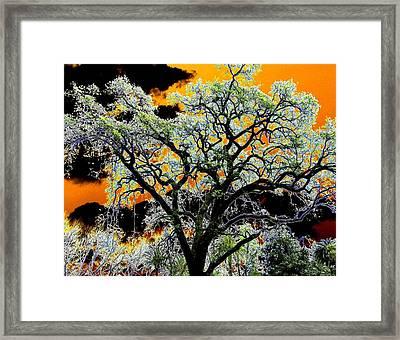 Oak Oasis Framed Print by Will Borden