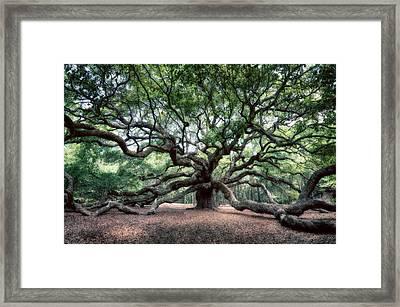 Oak Of The Angels Framed Print by Renee Sullivan