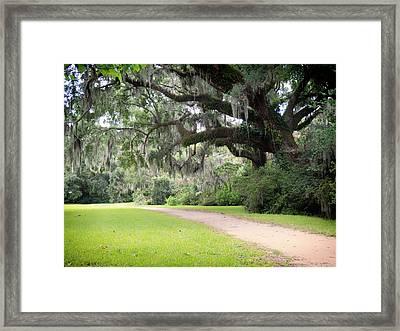 Oak Over The Trail Framed Print