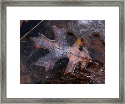 Oak Preservation Framed Print by Adam Long