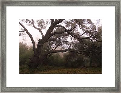 Oak Sentinel With Coastal Fog Framed Print by Robin Street-Morris