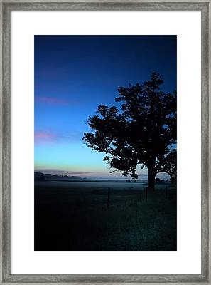 Oak Silhouette Framed Print by Gestalt Imagery
