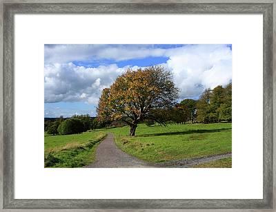 Oak Tree At Killarney National Park Framed Print by Aidan Moran