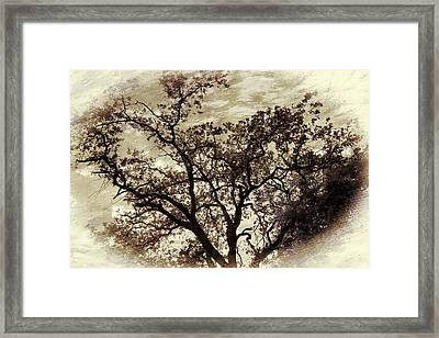 Framed Print featuring the photograph Oak Tree by Athala Carole Bruckner