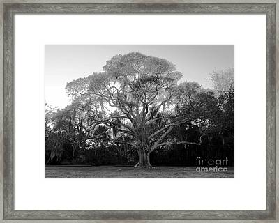 Oak Tree Framed Print by David Lee Thompson