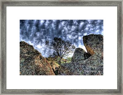 Framed Print featuring the photograph Oak Tree by Jim and Emily Bush