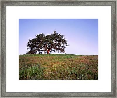Oak Tree Glow Framed Print