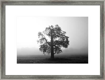 Oak Tree In Fog Monochrome Framed Print