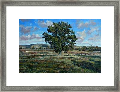 Oak Tree In The Vale Of Pewsey Framed Print by Andrew Taylor