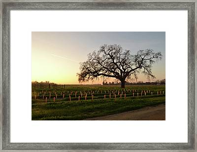 The Two Colors Of The Sky Framed Print by Alessandra RC