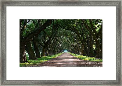 Oak Tree Path Framed Print