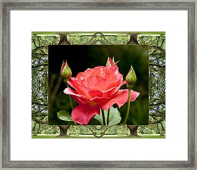 Oak Tree Rose Framed Print