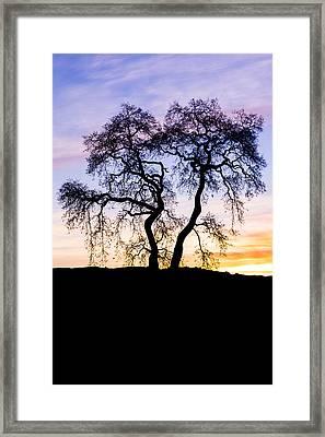 Oak Tree Silhouette At Dawn Framed Print