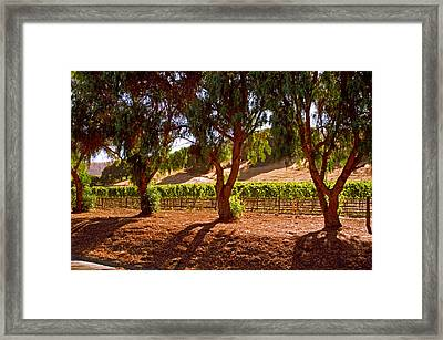 Oak Trees And Vines Framed Print by Gary Brandes
