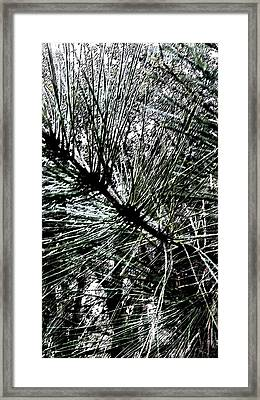 Oakhurst Pine Needles Framed Print