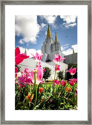 Oakland Pink Tulips Framed Print by La Rae  Roberts