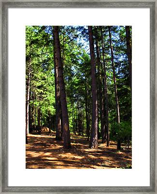 Oakrun Forest Framed Print by Joyce Dickens