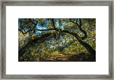 Framed Print featuring the photograph Oaks Arching Over Trail At Daley Ranch by Alexander Kunz