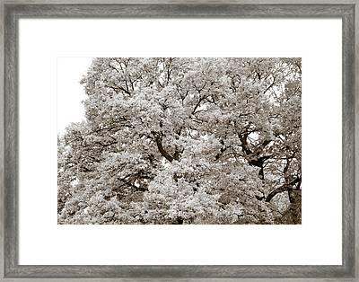 Oaks Framed Print