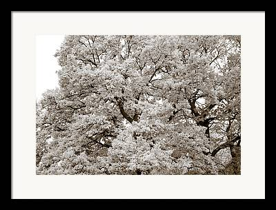 Quercus Framed Prints