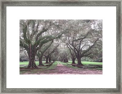 Oaks In Laurel Hill Park, Mount Pleasant, Sc Framed Print by Rick Berk