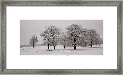 Oaks In Winter Framed Print by Gabriela Insuratelu