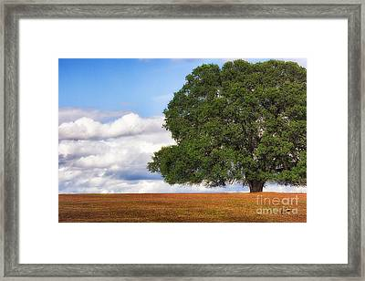 Oaktree Framed Print
