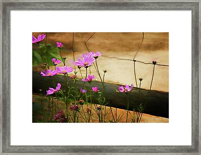 Framed Print featuring the photograph Oasis In The Desert by Lana Trussell