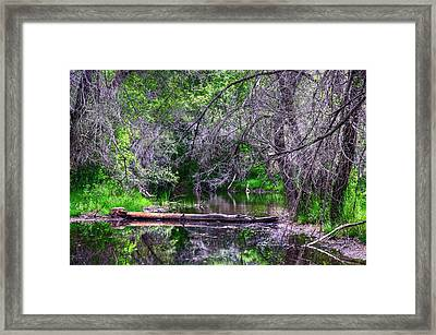 Oasis Of The Lake. Framed Print by Thomas  Todd