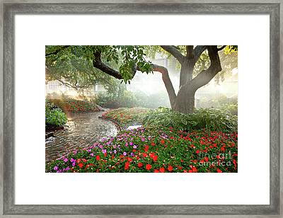 Oasis Framed Print by Susan Cole Kelly