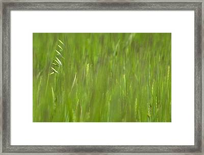 Oatfield Framed Print