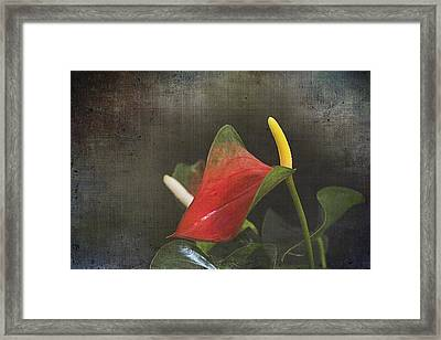 Obake Framed Print by Regina Williams