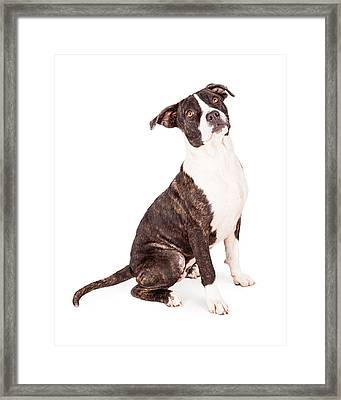 Obedient Terrier Mixed Breed Dog Framed Print